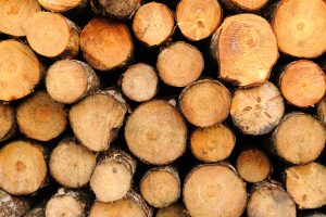Podcast — mass timber: a climate-positive investment